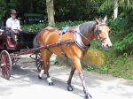 Horse Driven Carriage Ride
