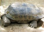 The Sleeping Giant Tortoise