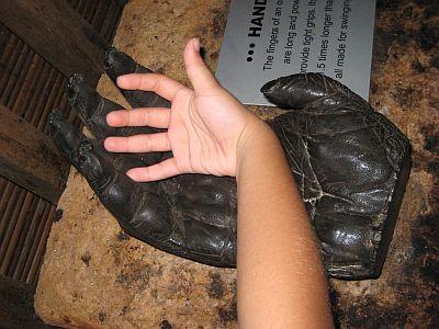 Kenan's Hand Vs The Orang Utan's