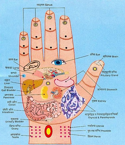 Colour Hand Anatomy Chart