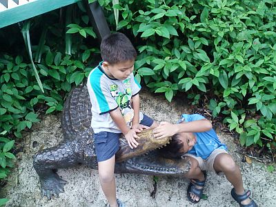 Crocodile Dumb Bee!